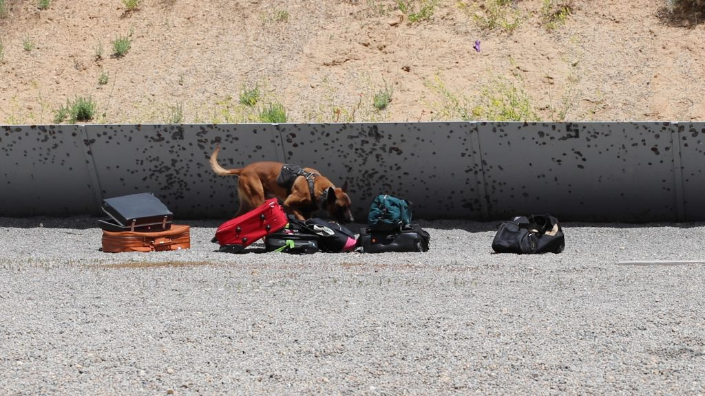 K9 Rocco sniffs suitcases set up on the gun range at Thistle.