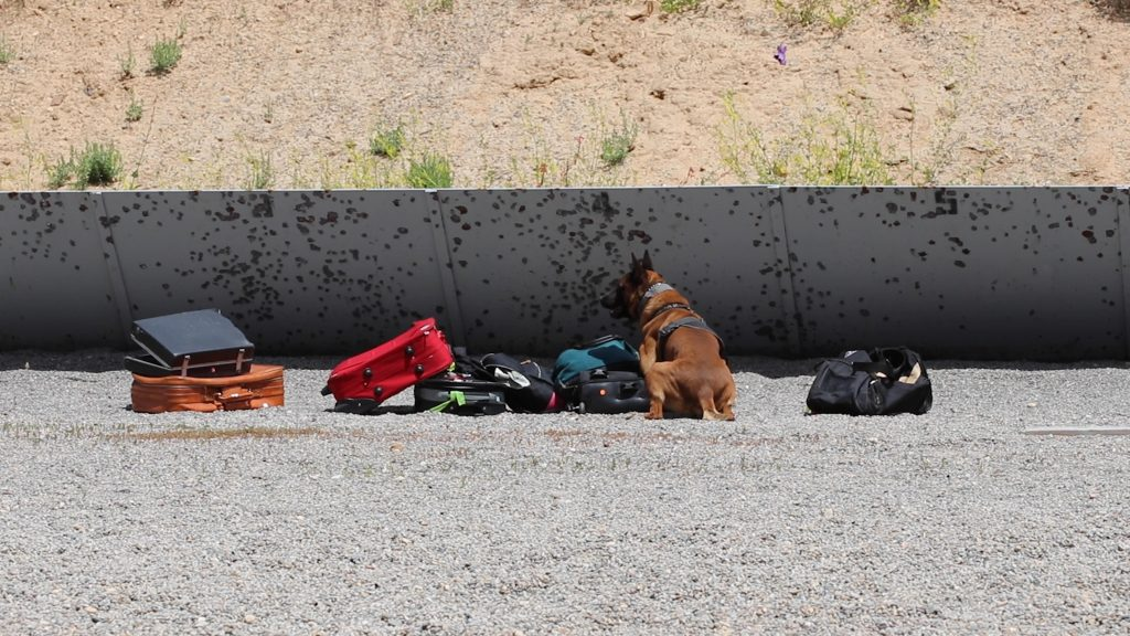 K9 Rocco indicates on a suitcase by sitting down next to it.