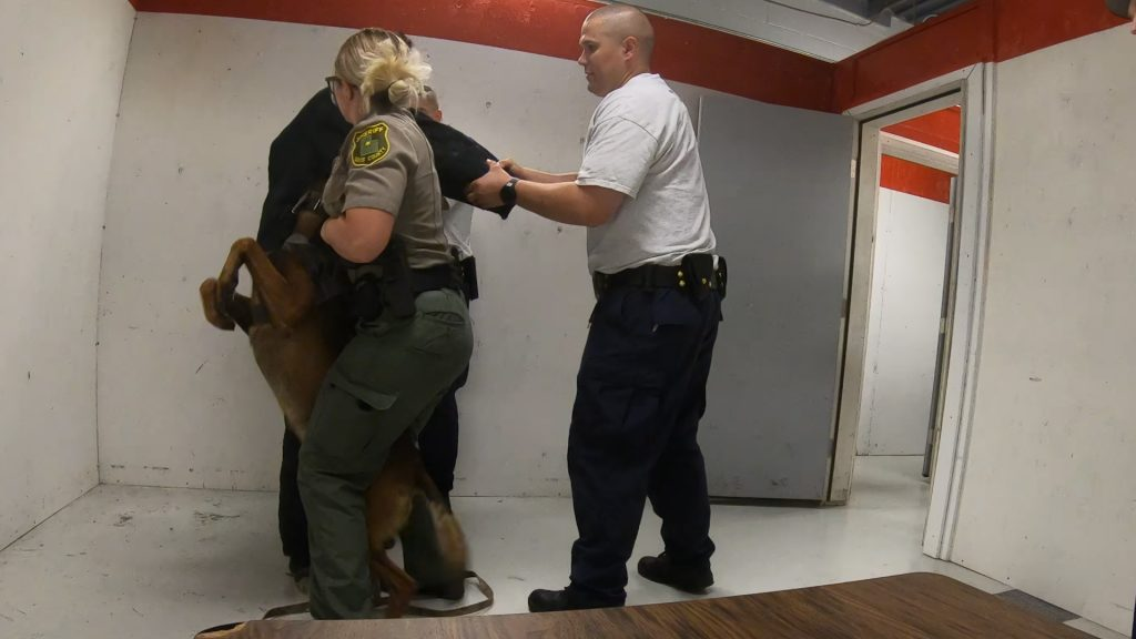 Cadets hold the suspect as Deputy Wennegreen gets K9 Nomos to release his grip.