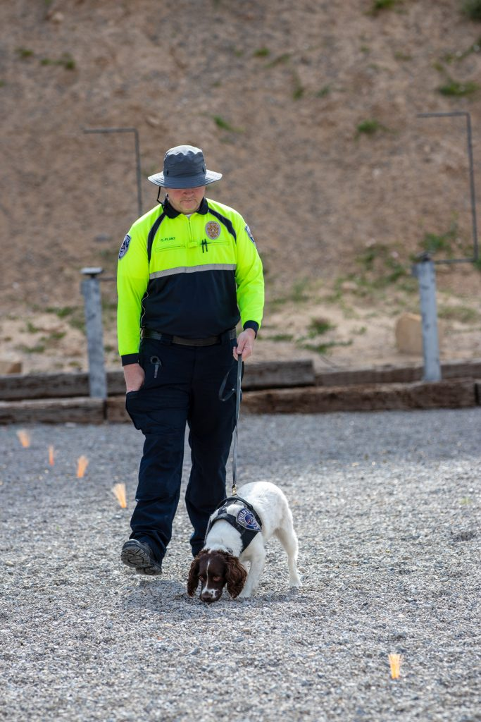 UTA Officer runs K9 Daisy through explosive detection exercises.