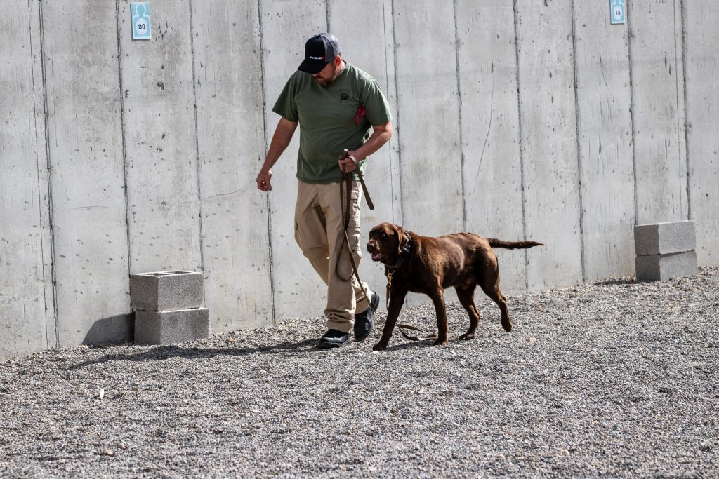 West Jordan Officer runs K9 Beau through explosive detection exercises.