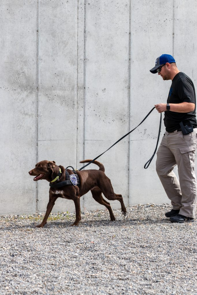 UTA officer runs K9 Kaiya through explosive detection exercises.