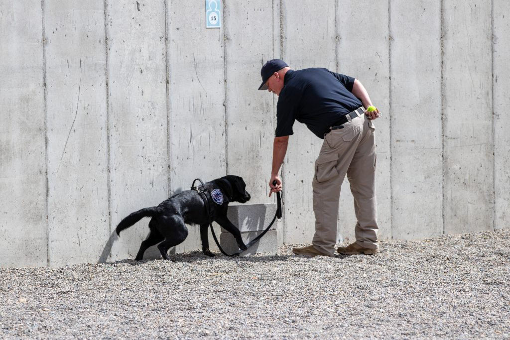 UTA officer runs K9 Lucky through explosive detection exercises.