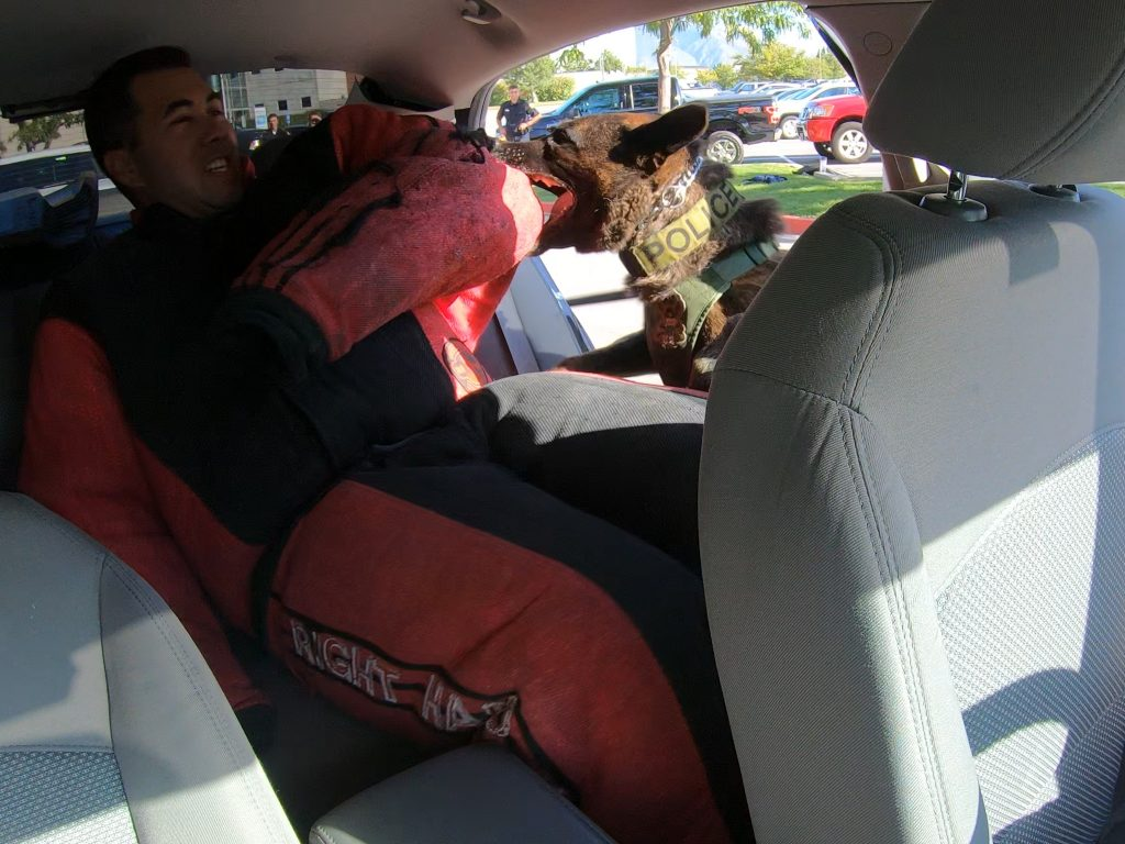 View shows camera facing the rear passenger seat of the car where a cadet is wearing a bite suit and Onyx is biting the cadet's arm.
