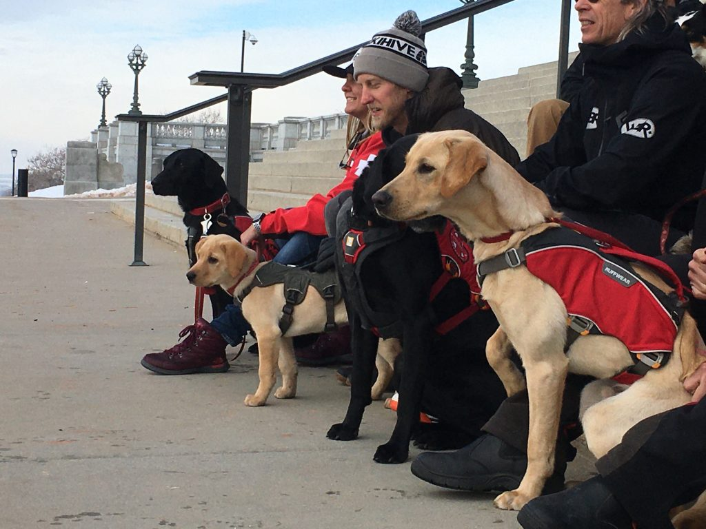 Search and rescue dogs from Wasatch Backcountry Rescue and their handlers pose for a photo