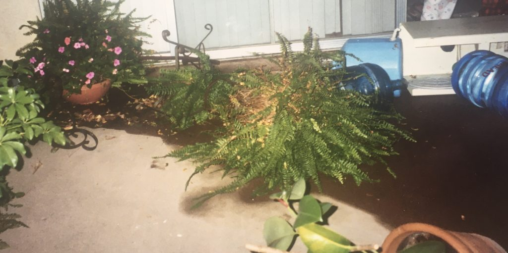 toppled plants and water cooler after northridge earthquake